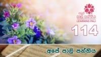 Learning Pali language 114 Shraddha tv buddhist